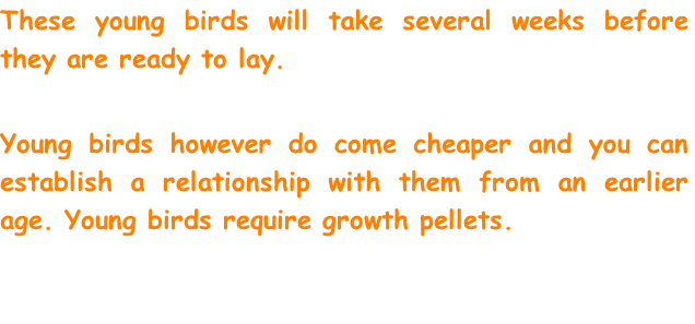 These young birds will take several weeks before they are ready to lay.  